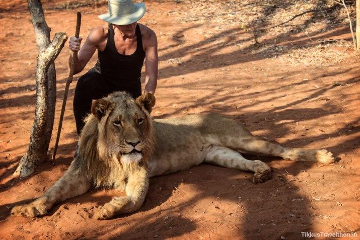 Petting Lions!