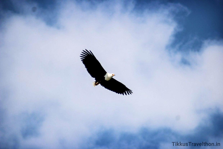 i_eagle