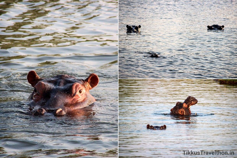 i_hippo
