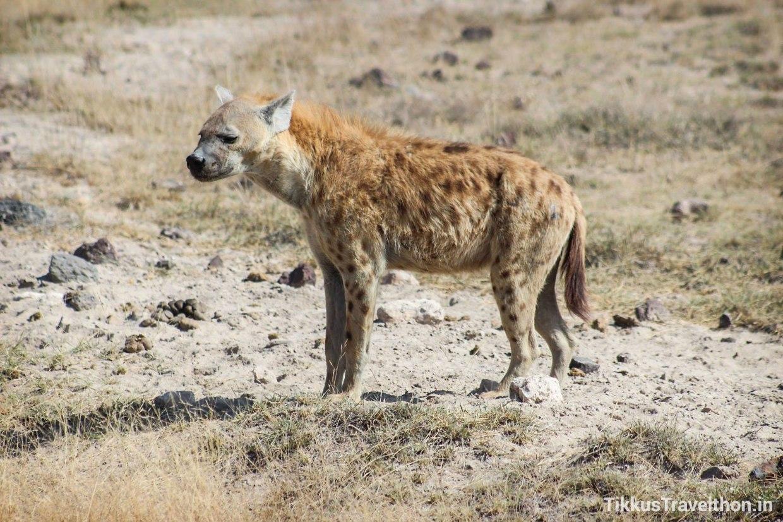 i_hyena