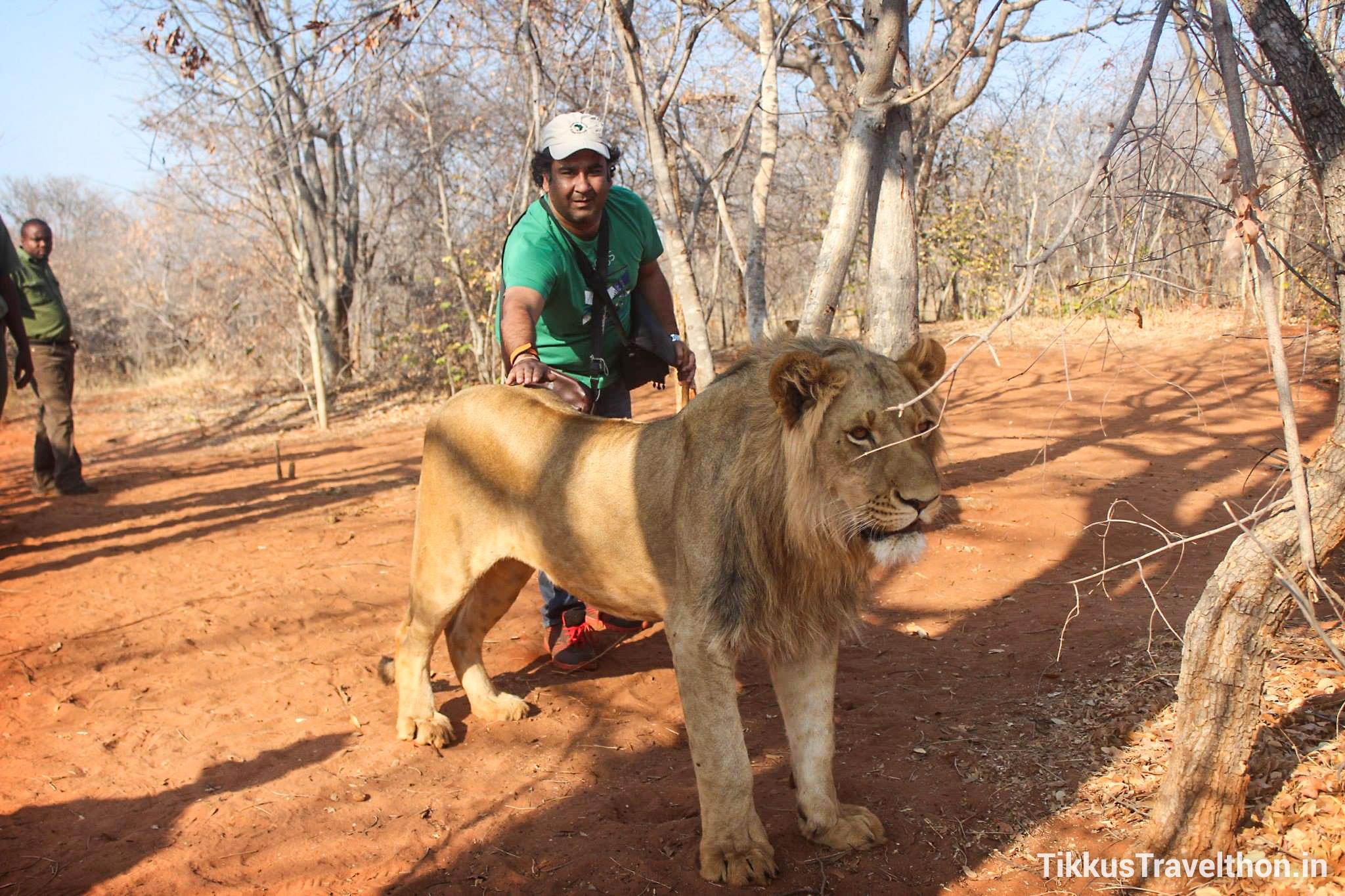 i_lion