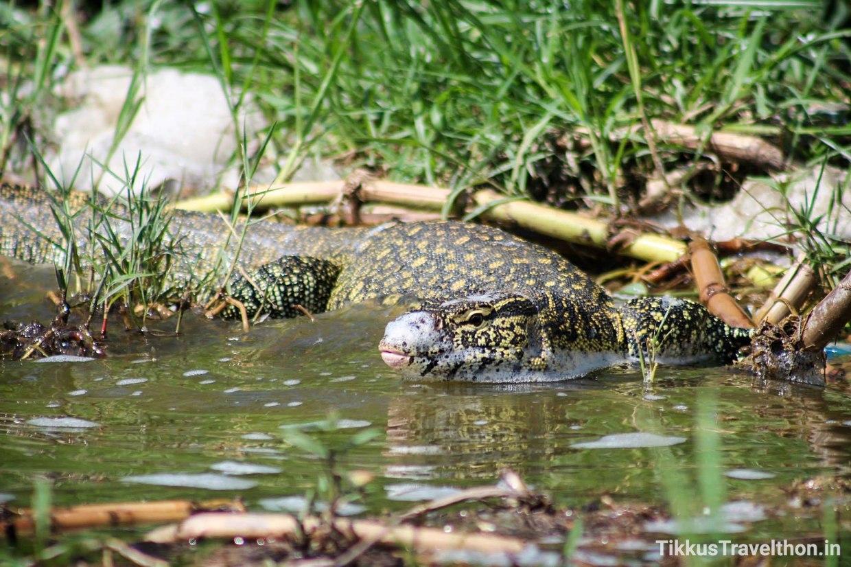 i_reptile