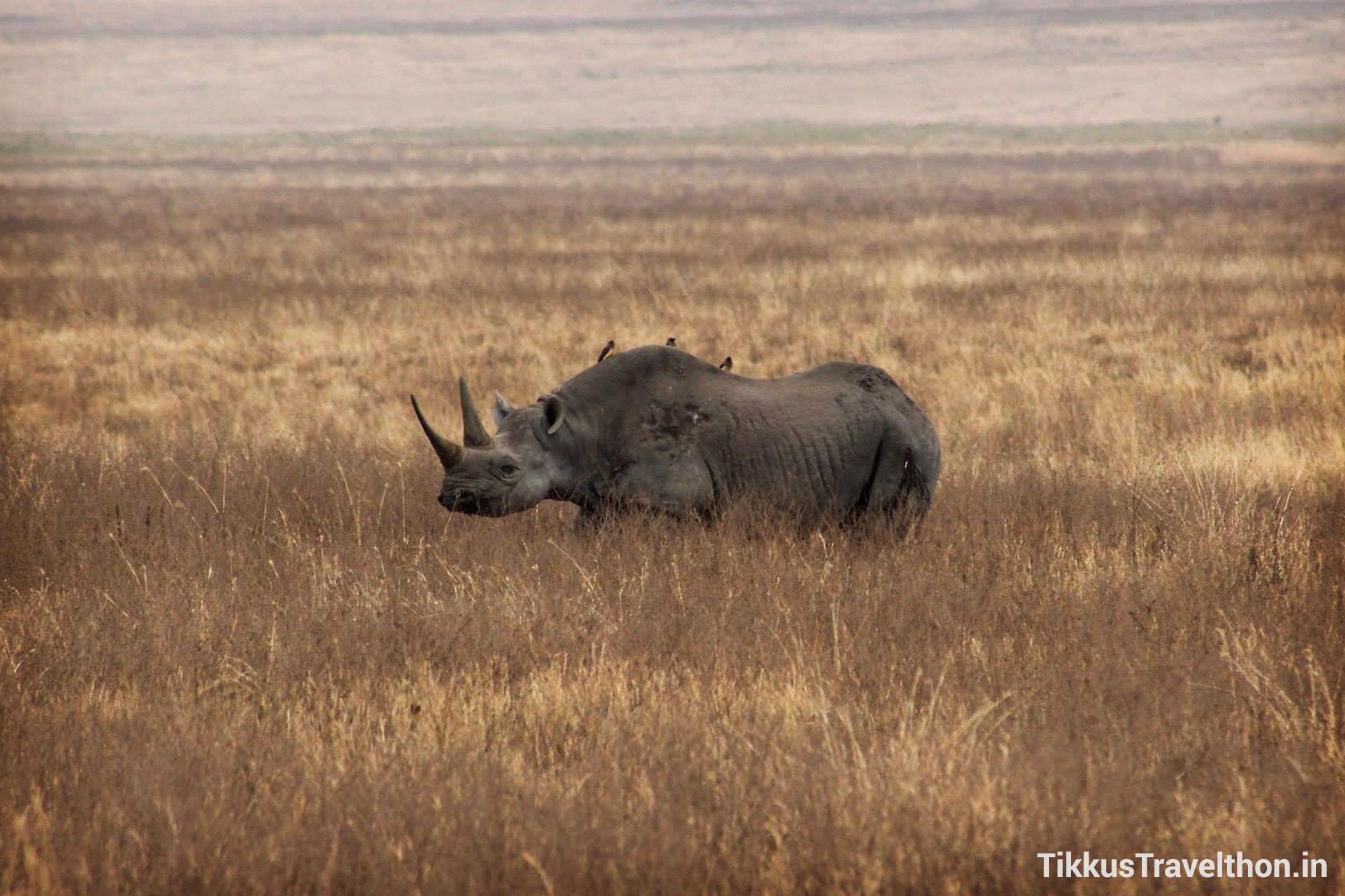 i_rhino